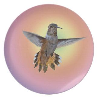 PLATO HUMMIMNGBIRD