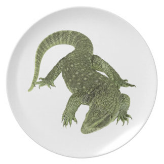 Plato Iguana disimulada de las Islas Galápagos