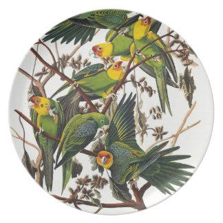 Plato Loro de Carolina - John James Audubon (1827-1838)