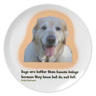 Plato Los perros son mejores que seres humanos