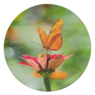Plato Mariposa brillante en la margarita anaranjada