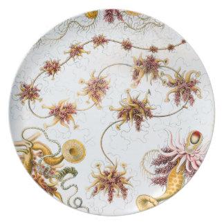 Plato Medusas de Ernst Haeckel Siphonophorae