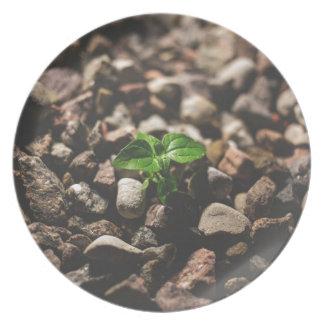 Plato Planta frondosa verde que comienza a crecer en los