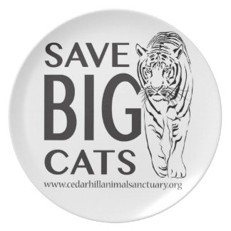 Plato SaveBigcats