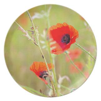 Plato Tiro blando de amapolas rojas en el campo