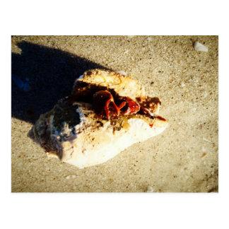 Playa la Florida de Clearwater del cangrejo de Postal
