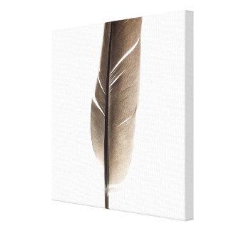 Pluma blanca frágil impresión en lienzo