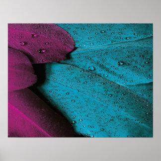 Pluma de la violeta de la turquesa póster