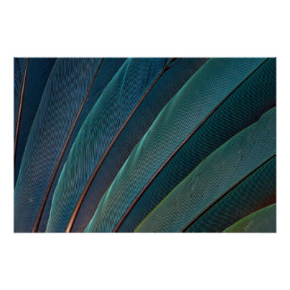 Pluma del loro del macaw del escarlata póster