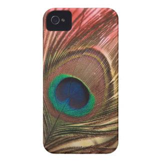 Pluma del pavo real iPhone 4 carcasas