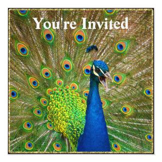 Plumaje perfecto del pavo real invitación 13,3 cm x 13,3cm