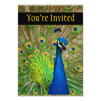 Plumaje perfecto del pavo real invitación 12,7 x 17,8 cm