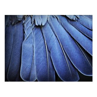 Plumas de pájaro azules postal