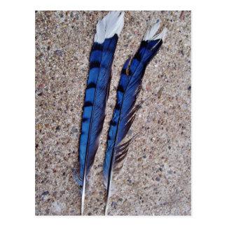 Plumas de pájaro del arrendajo azul tarjeta postal