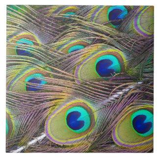 Plumas del pavo real azulejo cuadrado grande