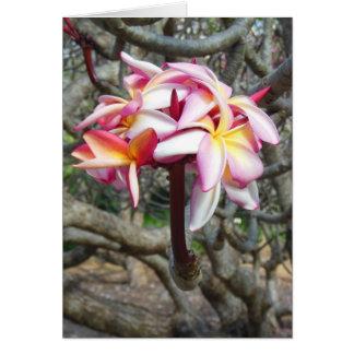 Plumeria hawaiano tarjeta de felicitación