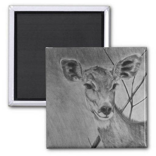 Poca gama de Kudu - dibujo del grafito Imanes