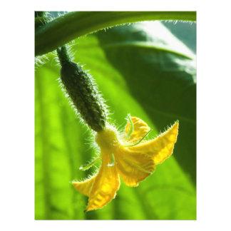 Poco pepino folleto 21,6 x 28 cm