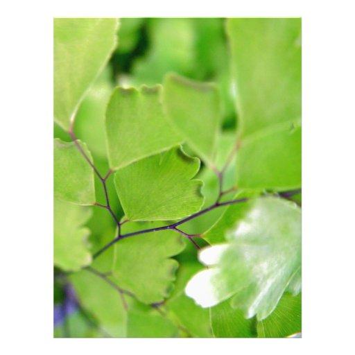 Poco primer verde de las hojas flyer a todo color