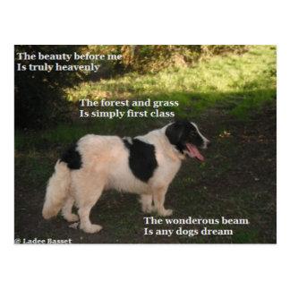 Poema de la postal cualquier sueño de los perros p