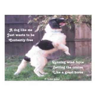 Poema del caballo del perro de la postal por el af