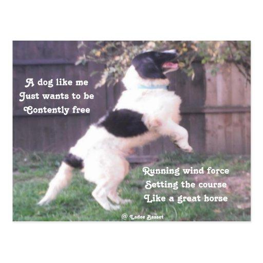 Poema del caballo del perro de la postal por el
