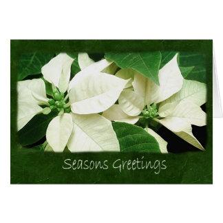 Poinsettias blancos 1 - saludos de las estaciones tarjeta de felicitación