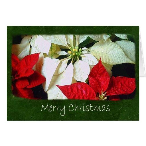 Poinsettias mezclados 2 del color - Felices Navida Felicitacion
