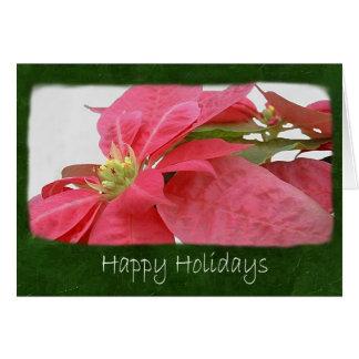 Poinsettias rosados 1 - buenas fiestas tarjeta de felicitación