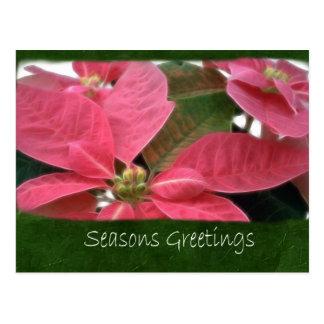 Poinsettias rosados 3 - saludos de las estaciones tarjetas postales