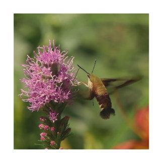 Polilla de Clearwing del colibrí, impresión de