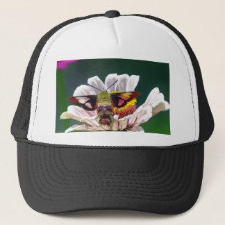 Polilla de colibrí gorra de camionero