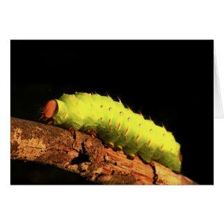 Polilla de Luna Caterpillar Tarjeta De Felicitación