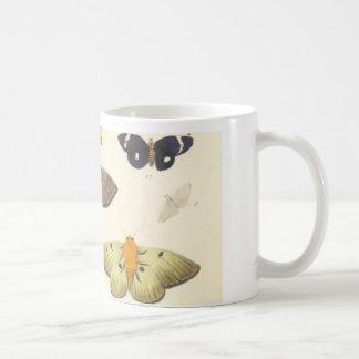 Polillas y mariposas de Nueva Zelanda Taza De Café