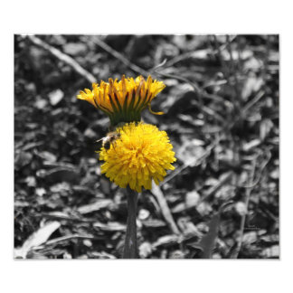 Polinización temprana de la primavera arte con fotos