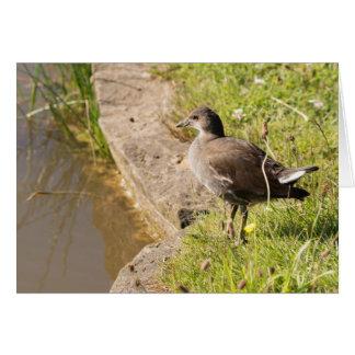 Polla de agua juvenil tarjeta de felicitación