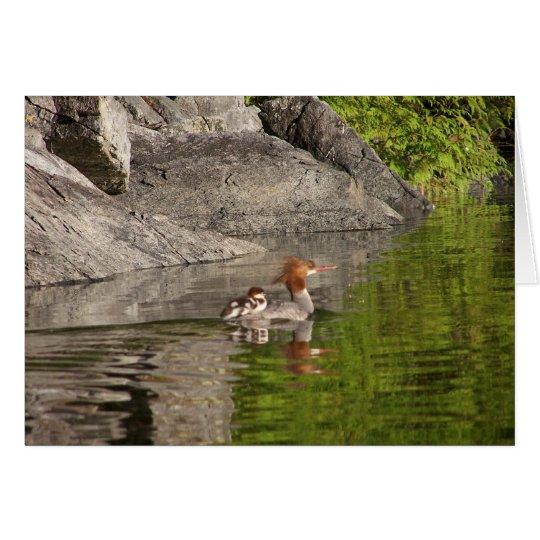 Pollo de agua y bebés tarjeta de felicitación