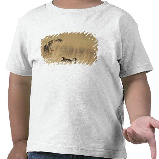 Pollos de pradera masculinos en los leks en el con camisetas