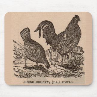 Pollos del siglo XIX de las aves del condado de Alfombrilla De Ratón