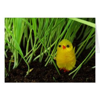 Polluelo de Pascua Tarjetón