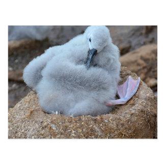 Polluelo del albatros postal