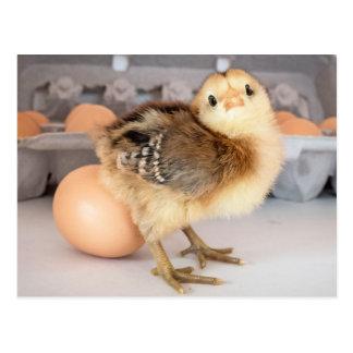 Polluelo y huevos preciosos del bebé postal