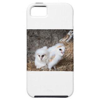 Polluelos de la lechuza común en una jerarquía funda para iPhone SE/5/5s
