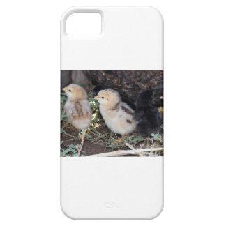Polluelos del bebé funda para iPhone SE/5/5s