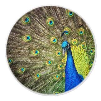 Pomo De Cerámica Botón hermoso del pavo real