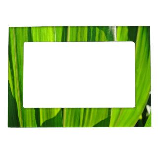 Portarretrato de hojas de mayo marcos magneticos