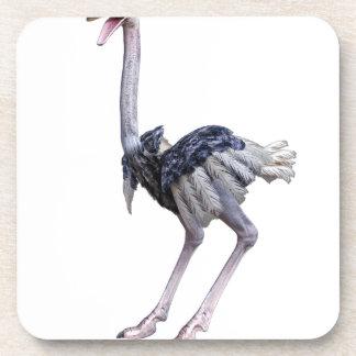 Posavasos Avestruz