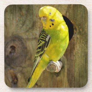 Posavasos Budgie amarillo