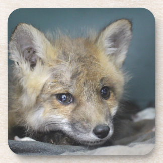 Posavasos Caja del teléfono del Fox