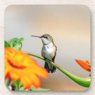 Posavasos Colibrí en una planta floreciente